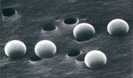 Nuclepore 0.4µm Track-etch membrane with 0.5 µm latex beads